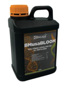 BMusa Bloom