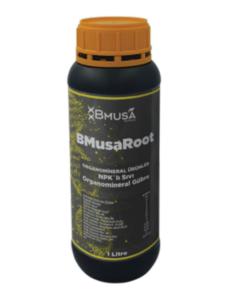 BMusa Root